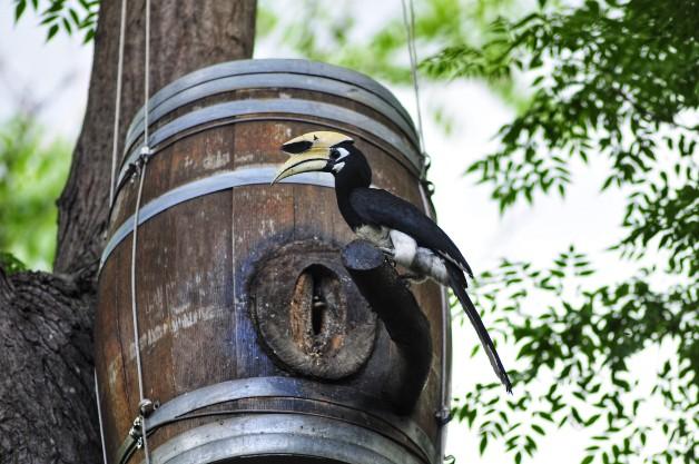 """""""สยาม ไวเนอรี่"""" สานต่อ """"โครงการติดตั้งโพรงรังเทียมของนกเงือกจากถังไวน์""""  ร่วมอนุรักษ์นกเงือกอย่างยั่งยืน"""