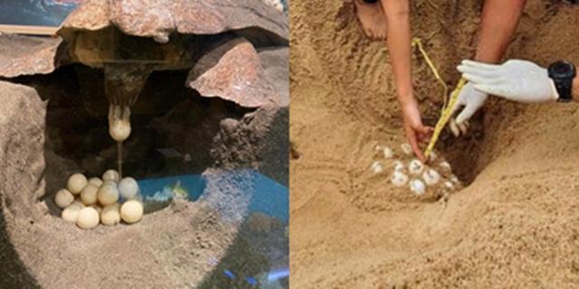 ดร.ธรณ์ ให้ความรู้การวางไข่เต่าทะเลสายพันธุ์ต่างๆ และช่วยกันดูแล-ลดปริมาณขยะ