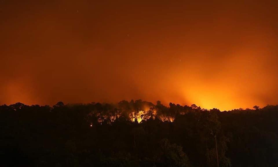 เปิดรับบริจาคเงินและหน้ากากกันฝุ่น ช่วยเหลือพี่น้อง จ. ตราด จากเหตุการณ์ไฟไหม้ป่า