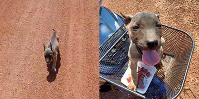 ลูกสุนัขจร! ผอมโซวิ่งตามรถสาวใจดีไม่หยุด สุดท้ายสาวใจอ่อนพากลับบ้านด้วย (ชมคลิป)