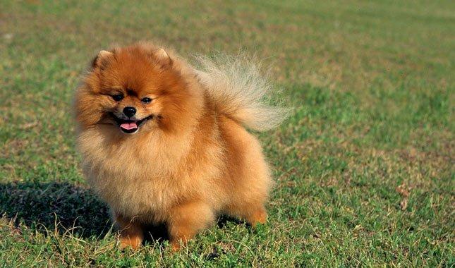 """ฮ่องกงพบสุนัขติดเชื้อ """"โควิด-19"""" หลังเจ้าของติดเชื้อไวรัสนี้ เร่งตรวจซ้ำหาความจริงอีกรอบ"""