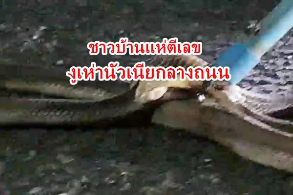 ชาวบ้านแห่ตีเลขพบงูเห่านัวเนียกันกลางซอย ที่.กระบี่