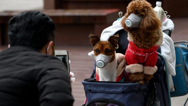 ฮ่องกงสั่งกักกันโรคสัตว์เลี้ยง หลังพบสุนัขมีเชื้อไวรัสโควิด-19