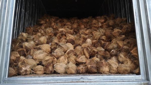 ศุลกากร !!จับลักลอบขนมะพร้าวเถื่อนอินโดนีเชีย กว่า 20 ตัน