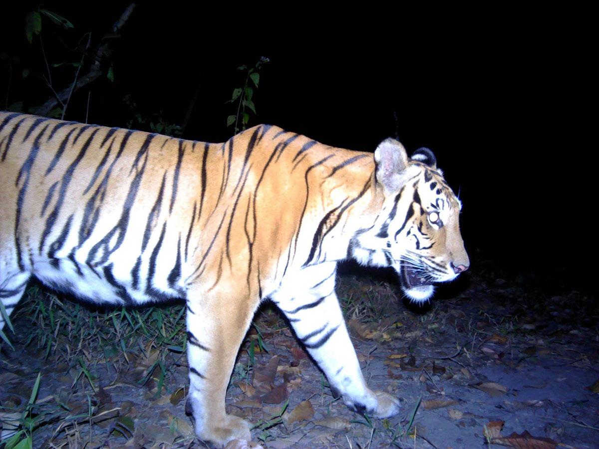 TWT130M (ภาพจาก กรมอุทยานแห่งชาติ สัตว์ป่า และพันธุ์พืช)