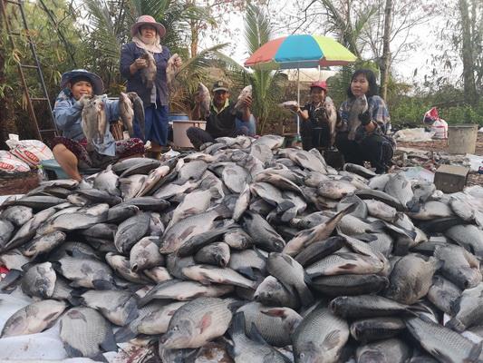 (ชมคลิป)ฝนหลงฤดูพ่นพิษ!เกษตรกรน้ำตาเล็ดปลากระชังน็อกตาย ขาดทุนยับแบกหนี้เพิ่ม
