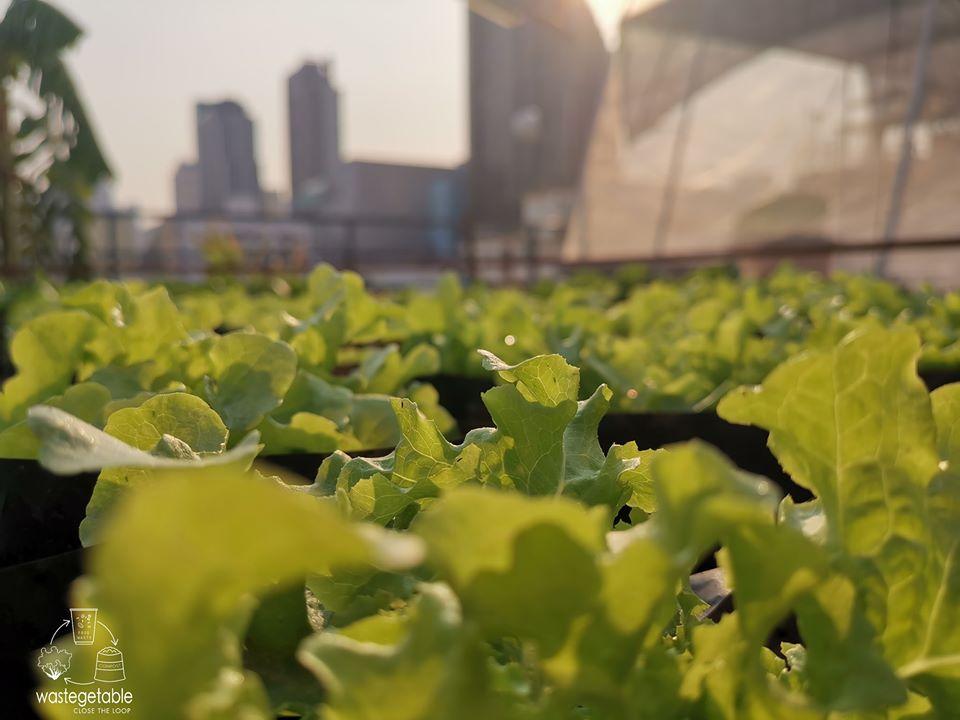 """""""จากเศษอาหารสู่ฟาร์มผักลอยฟ้า"""" ธุรกิจผักปลอดสารพิษสำหรับคนกรุงเทพ"""