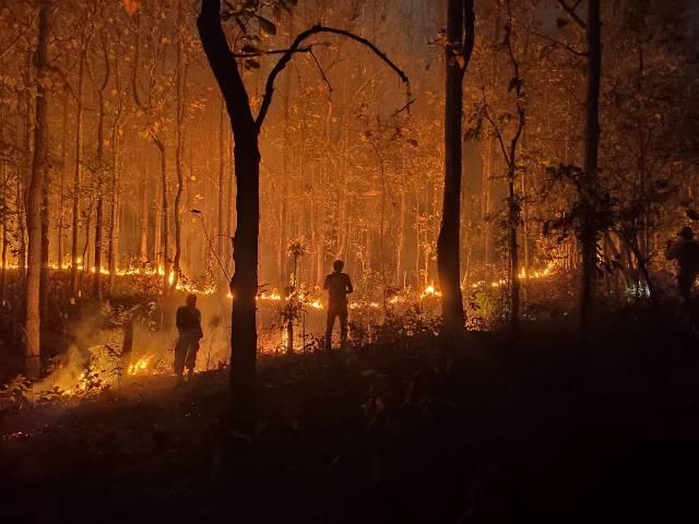 สุดแสบ!พบพรานป่าสุมไฟตีผึ้งลามไหม้จนชุมชนผาตั้งหวิดวอด