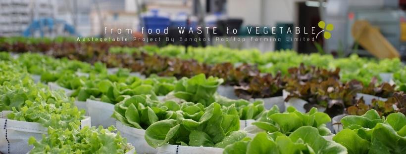 """Wastegetable เปลี่ยน """"ขยะเศษอาหาร"""" เป็น """"สวนผักกลางเมือง"""""""