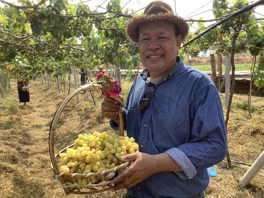 """สิงหาคมนี้เจอกันที่ """"สวนลุงเดช""""ชมชิมซื้อองุ่นอินทรีย์แดนอีสาน"""