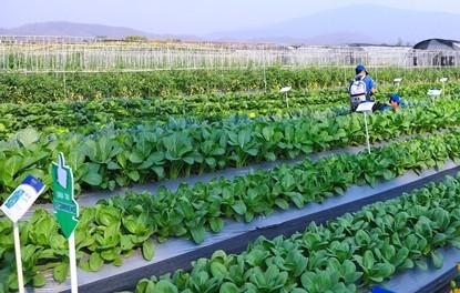 จับตาสินค้าเกษตร-อาหารออร์เดอร์พุ่งไทย-เทศแห่ตุนรับมือโควิด-19