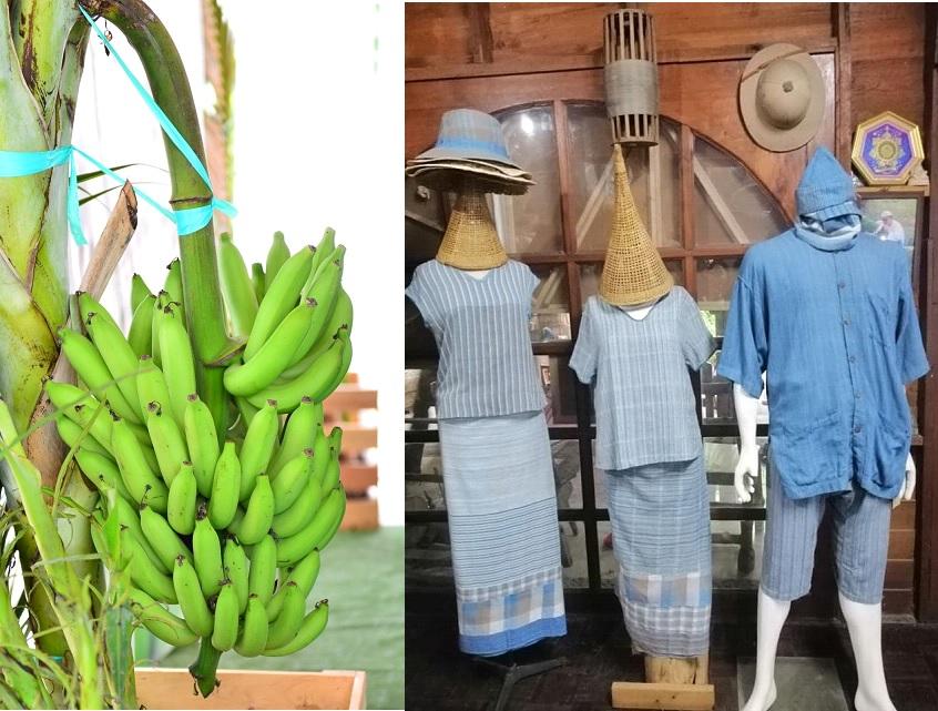 """""""พาณิชย์""""ขึ้นทะเบียนสินค้า GI ใหม่ 2 รายการ """"ผ้าหม้อห้อมแพร่-กล้วยหอมทองปทุม"""""""