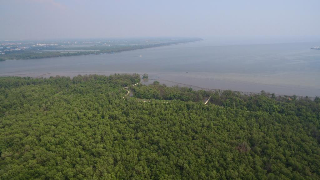 ไทยยูเนี่ยน ร่วมปลูกต้นไม้จำนวนกว่า 7,000 ต้น ชดเชยการปล่อยคาร์บอนจากงานประชุมผู้บริหารทั่วโลก