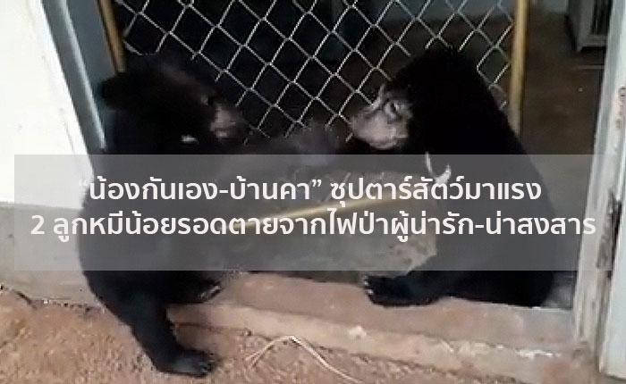 """""""น้องกันเอง-บ้านคา"""" ซุปตาร์สัตว์มาแรง 2 ลูกหมีน้อยรอดตายจากไฟป่าผู้น่ารัก-น่าสงสาร"""