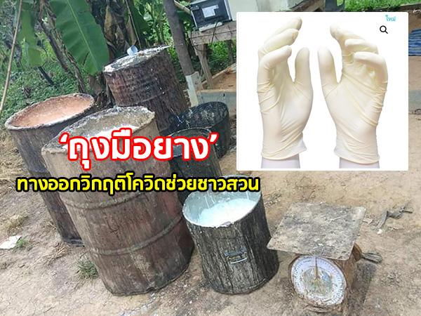 """อุปนายกสมาคมฯ แนะไทยควรเร่งผลิต """"ถุงมือยาง"""" ทางออกวิกฤติโควิด-19 ช่วยเกษตรกร"""