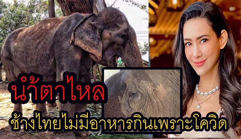 """""""โย"""" วอนช่วยช้างไทย ใกล้อดตายไม่ได้กินอาหารมาแล้ว 7 วัน เหตุ พรก.ฉุกเฉิน ทำท่องเที่ยวพัง"""