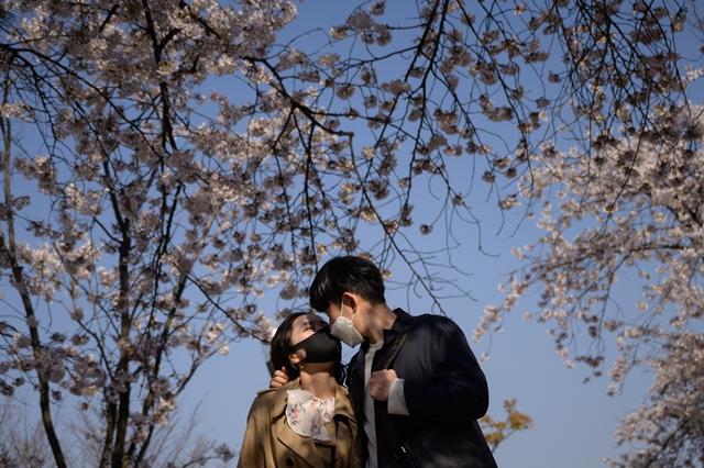 คู่รักสวมหน้ากากยืนถ่ายรูปใต้ต้นซากุระในเขตเยอุยโดของกรุงโซล เมื่อวันที่ 5 เมษายน