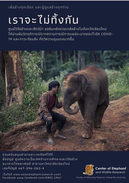 รักษาฟรี! ศูนย์วิจัยช้างฯ มช.เดินหน้าช่วยปางช้าง ดูแลช้างป่วย