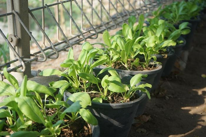 """สร้างพื้นที่อาหารสำรอง! """"สวนผักคนเมือง""""ชวนคนไทย """"ปันพื้นที่-ปันผัก-ปันรัก""""รับมือโควิด 19"""