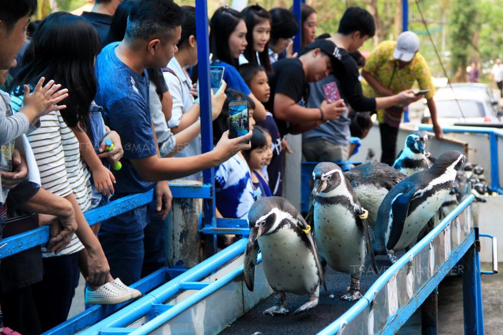 """ตามติดชีวิตสัตว์โลกน่ารัก กับ """"สวนสัตว์ผ่านโซเชียลมีเดีย"""""""