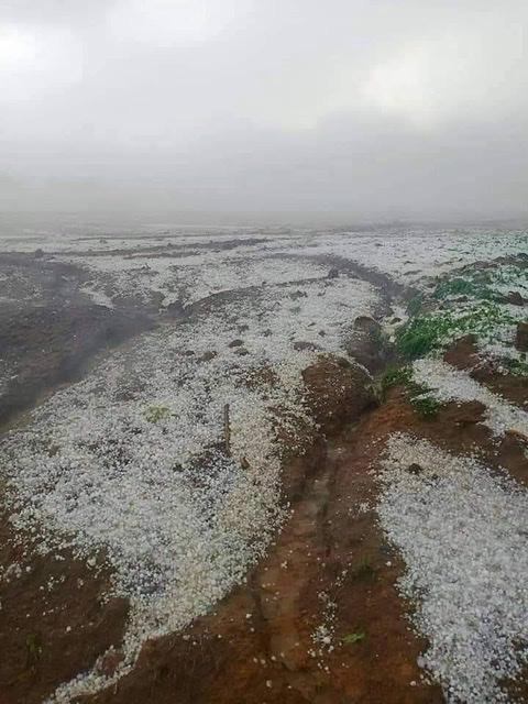ขาวโพลนเต็มภู!พายุลูกเห็บถล่มภูทับเบิกหนักสุดรอบ 40 ปี ไร่กะหล่ำ-ผักกาดขาวเสียหายยับ