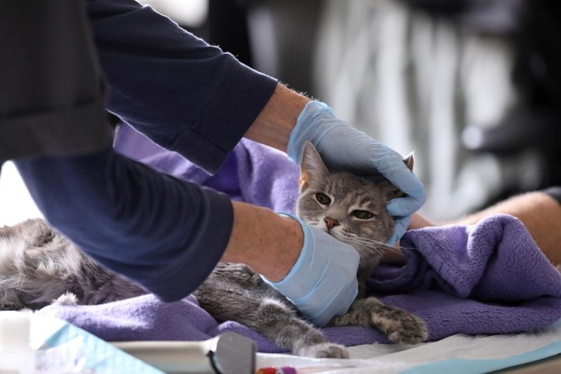 ทาสผวา!! พบ 'แมวบ้าน 2 ตัว' ในนิวยอร์กติดเชื้อโควิด-19