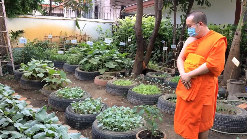 วัดเชียงใหม่พลิกวิกฤติต้องบิณฑบาตช่วงโควิด-19ปลูกผักเองกินเองแจกชุมชน