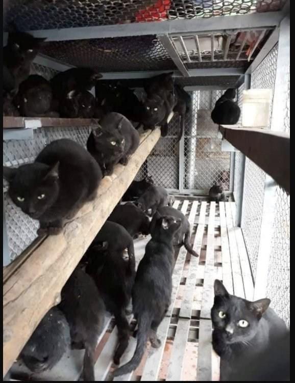 หมอแล็ปเตือน! อย่าหลงเชื่อ ซุปแมวดำไม่สามารถรักษา-ป้องกัน Covid-19ได้
