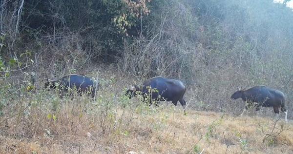 น่าชื่นใจ..พบในป่าแก่งกระจานพบสัตว์ป่าหายากมากถึง 18 ชนิด