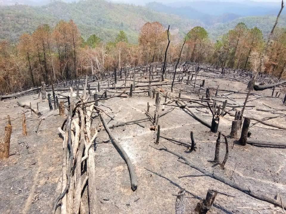 ป่าไม้ที่เชียงใหม่ ถูกเผา-ทำลายวอดวาย (ภาพ เพจ เหยี่ยวไฟ-23 เม.ย.63)