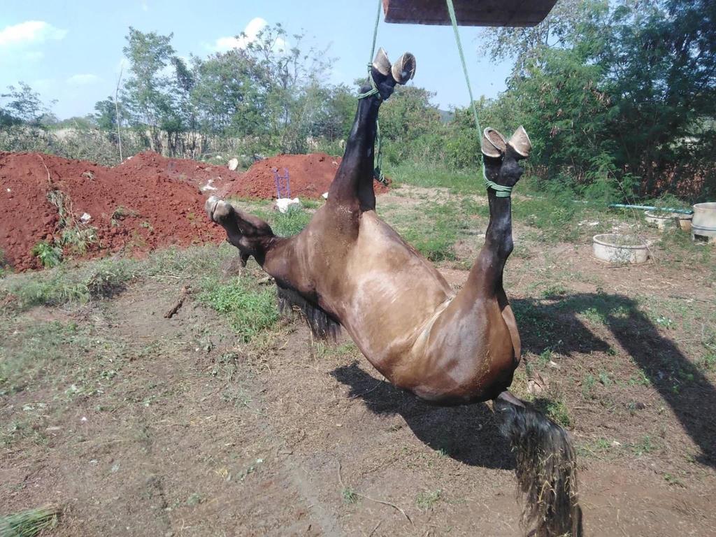 """""""ต๊ะ นารากร"""" วอนนายกฯ ออก พ.ร.ก.ฉุกเฉินควบคุมโรคระบาดม้าทั่วประเทศ ชี้รุนแรงไม่แพ้โควิด (ชมคลิป)"""