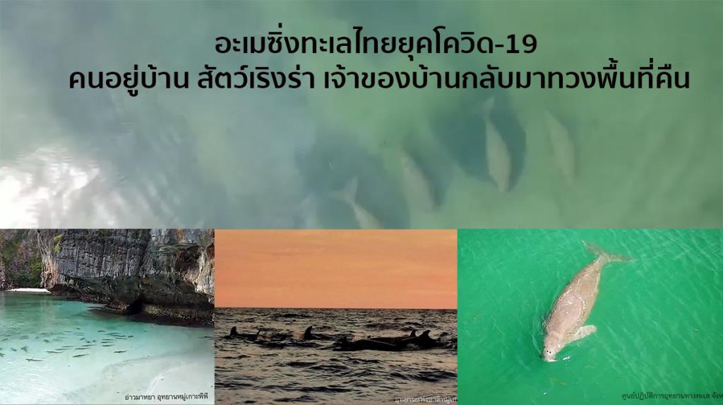 อะเมซิ่งทะเลไทยยุคโควิด-19 คนอยู่บ้าน สัตว์เริงร่า เจ้าของบ้านกลับมาทวงพื้นที่คืน