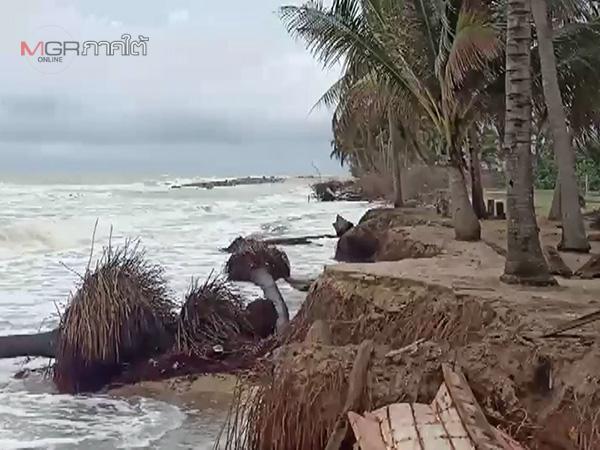 คลื่นลมแรงกัดเซาะหาดหัวไทรบ้านจ่อพังลงทะเล พ้อเหตุสร้างเขื่อนกันคลื่นจนกระแสน้ำปั่นป่วน
