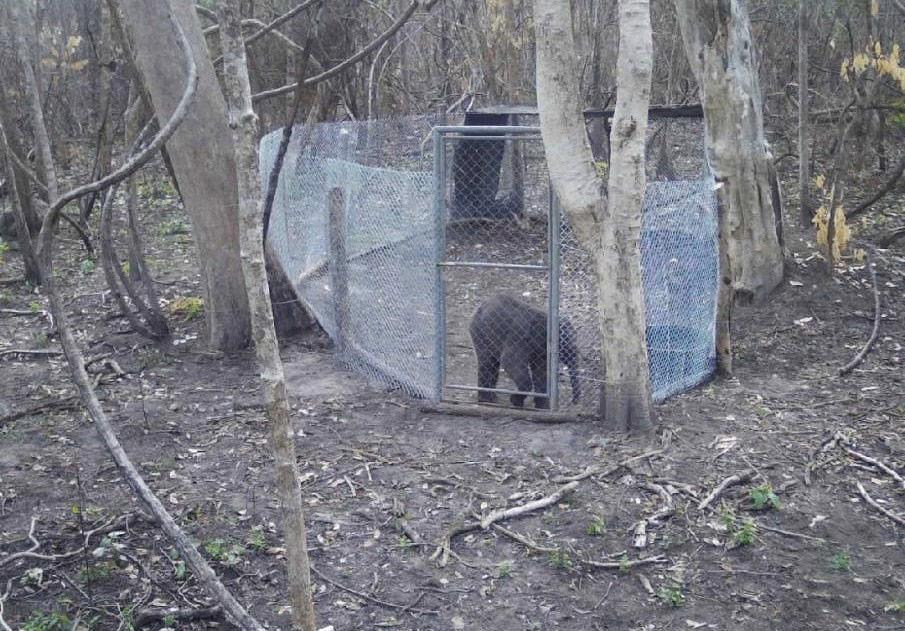ลุ้น! ภารกิจส่งลูกช้างป่าหลงแม่ กลับคืนผืนป่าห้วยขาแข้ง