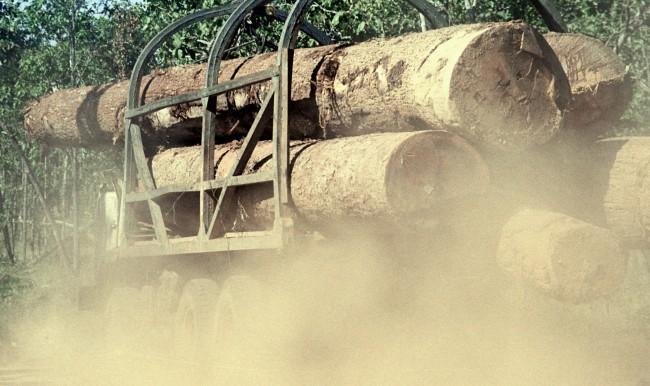 กลุ่มนักอนุรักษ์สับ จนท.เขมรใช้จังหวะโควิด-19 ระบาดขวางตระเวนป่า เปิดทางมอดไม้ลอบตัดไม่เหลือ