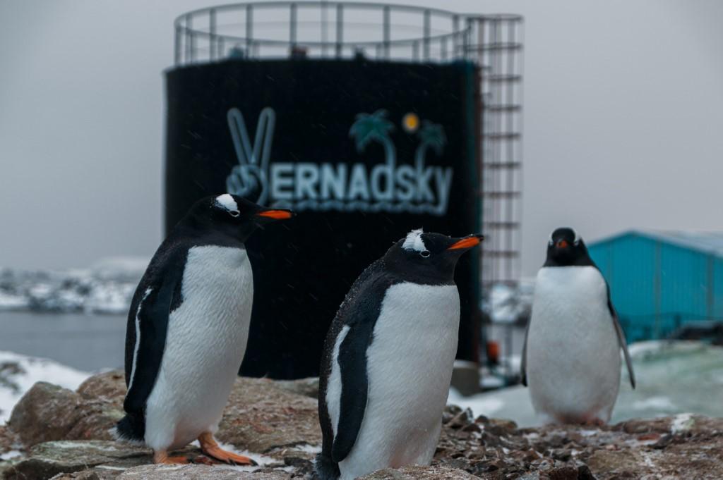 เพนกวินใกล้ๆ สถานีวิจัยของยูเครน (Yevgen Prokopchuk / 25th Ukrainian Antarctic Expedition / AFP)