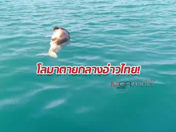 พบซากโลมาหลักโหนกยาว 2.5 เมตรตายลอยกลางอ่าวไทย หน้าอ่าวหัวไทร จ.นครศรีธรรมราช