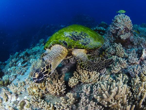 โลกใต้ทะเลเกาะเต่าฟื้นตัว สวยงาม! หลังปิดเกาะ  จากโควิด-19 ระบาด