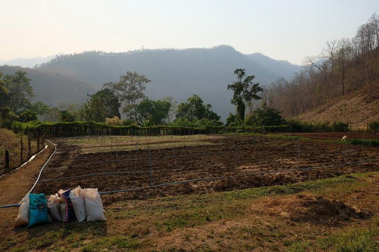 จัดสรรพื้นที่เพื่อเตรียมทำเกษตรผสมสาน