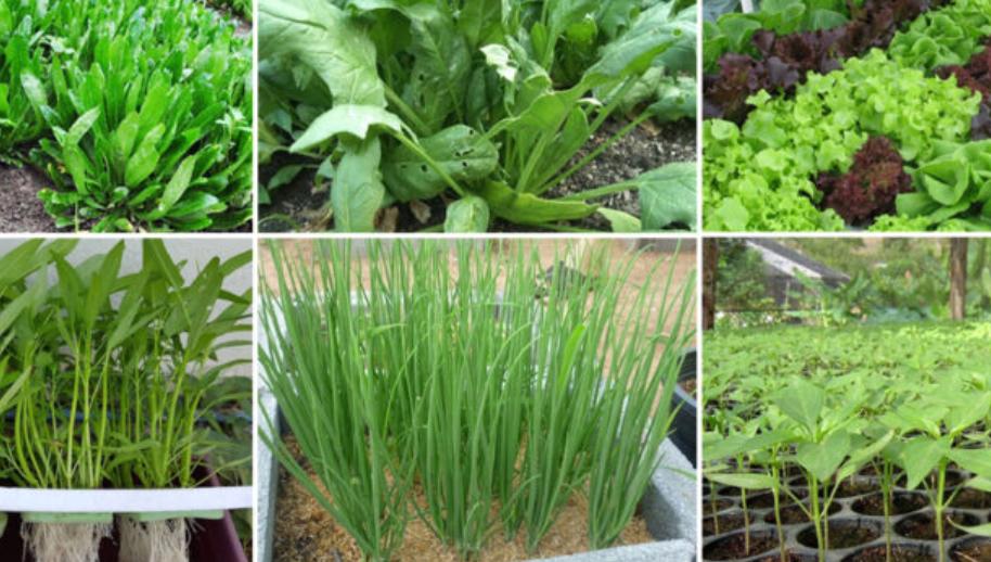 """วิกฤตโควิด """"กลับบ้านนอก"""" ทำเกษตรเลี้ยงชีพ วันนี้ แนะนำผักที่ปลูกง่าย ขายเร็ว"""