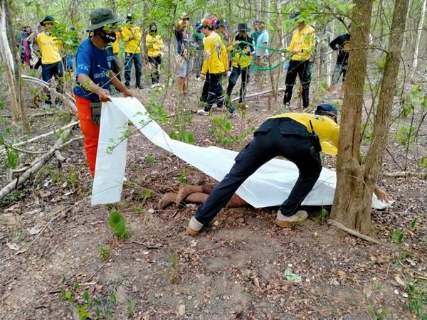 กาญจนบุรี - ลุงยาม รีสอร์ทดังเมืองกาญจน์ ขับขี่จักรยายนต์เข้าป่าสลักพระ หายข้ามวัน สุดท้ายกลายเป็นศพ เหตุถูกช้างป่าทำร้ายจนหน้ายุบ ขาผิดรูป