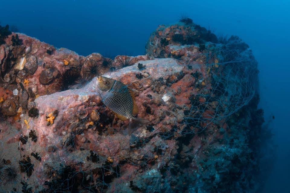 ดร.ธรณ์ เผยปลาที่กองหินชุมพรเกาะเต่า ลดลงมากช่วงโควิด คาดเนื่องจากไม่ อยู่ในเขตอุทยานฯ