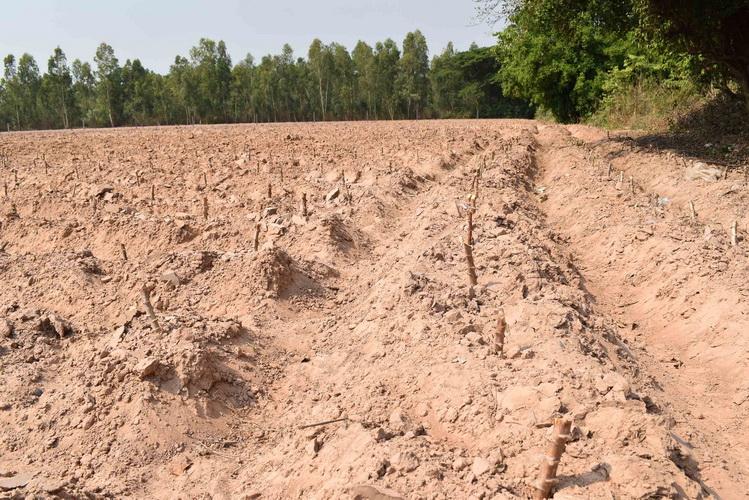 เกษตรกรนอกเขตชลประทานจี้รัฐขุดบ่อบาดาลสูบน้ำด้วยพลังแสงอาทิตย์แก้แล้ง