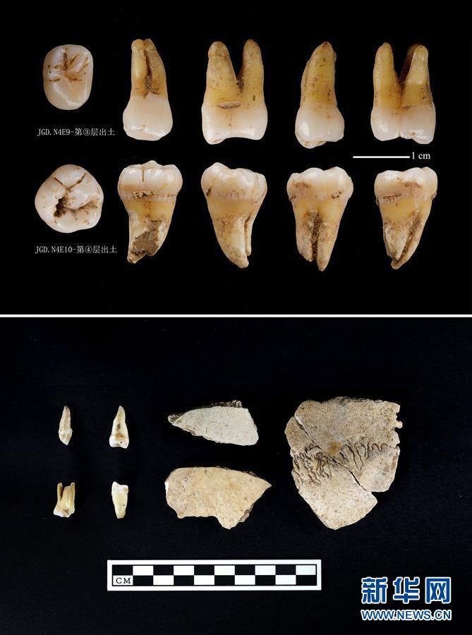 ชิ้นส่วนฟันและกะโหลกศีรษะมนุษย์ที่ขุดพบมาจากซากปรักหักพังถ้ำเจี้ยเกอเขตหนานเจิ้ง มณฑลส่านซี