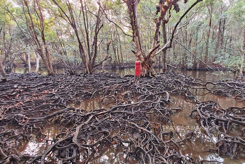 """10 ป่าชายเลนสุดเจ๋ง ฉลอง """"วันป่าชายเลนแห่งชาติ"""" ครั้งแรกในเมืองไทย"""