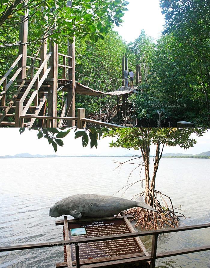 ป่าชายเลนอ่าวคุ้งกระเบน : สะพานแขวน (บน), อนุสรณ์หมูดุด (ล่าง)