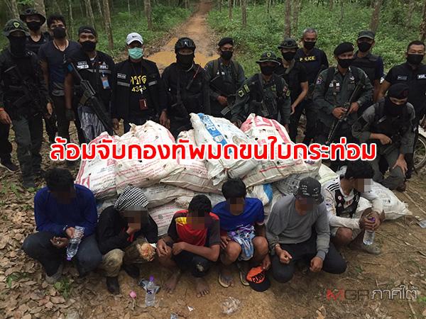 ตชด.ปิดล้อมป่าชายแดนไทย-มาเลย์ จับกองทัพมดได้ 6 คน รถ 7 คันขนใบกระท่อมลงจากเขา