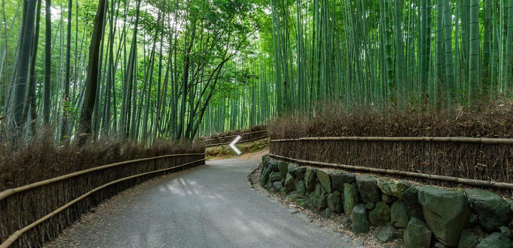 """ชวนเที่ยวชมความงาม """"ป่าไผ่แห่งอะระชิยะมะ"""" ในเกียวโต ญี่ปุ่น  ผ่าน VR Tour"""