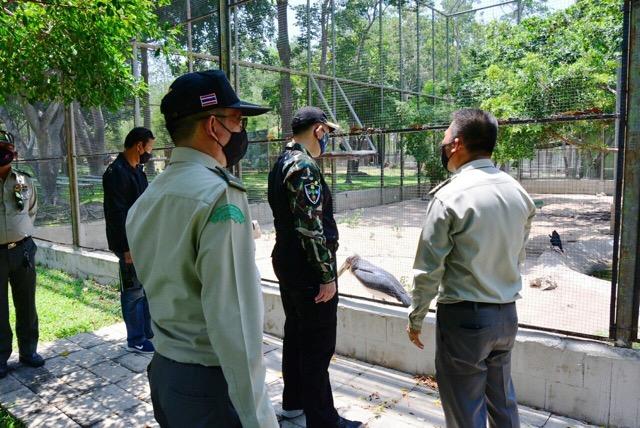 มนุษย์ใจร้ายล่าแม่เอาลูกขาย ภัยคุกคามนกเงือกไทย
