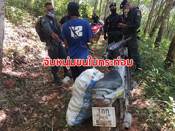 ตชด.จับหนุ่มขี่ จยย.ขนใบกระท่อมออกจากป่าชายแดนไทย-มาเลเซีย ยึดของกลาง 25 กก.